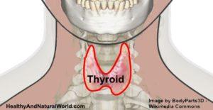 Un Tonique facile et efficace pour les troubles de la thyroïde
