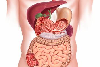 Comment le stress affecte votre intestin et que est le remède