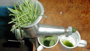 Le jus d'herbe de blé mis à l'épreuve
