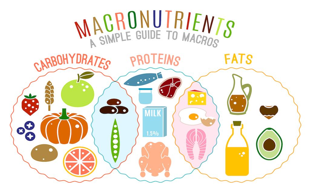 "Macronutriments et enzymes ""width ="" 1021 ""height ="" 640 ""srcset ="" https://naturallysavvy.com/wp-content/uploads/2019/04/macronutrients.jpg 1021w, https://naturallysavvy.com/wp- content / uploads / 2019/04 / macronutrients-300x188.jpg 300w, https://naturallysavvy.com/wp-content/uploads/2019/04/macronutrients-768x481.jpg 768w ""tailles ="" (max-width: 1021px) 100vw, 1021px"