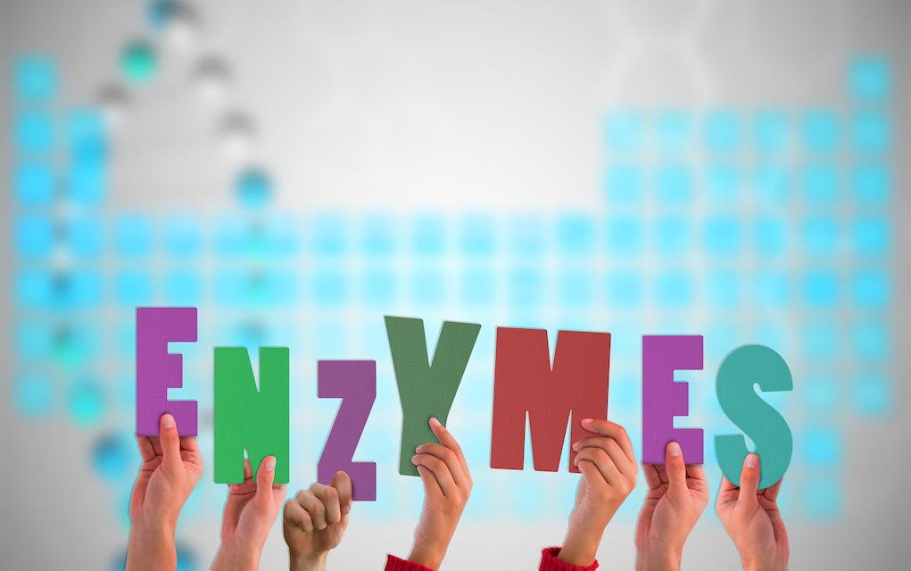 Enzymes Que sont-elles et pourquoi en avez-vous besoin?