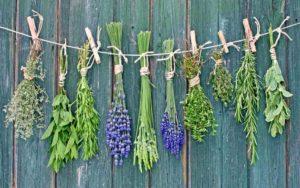 Questions / Réponses à base de plantes: Questions fréquentes sur les herbes