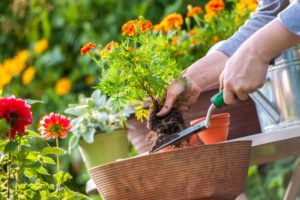 Ten Uses for Epsom Salt in Your Garden